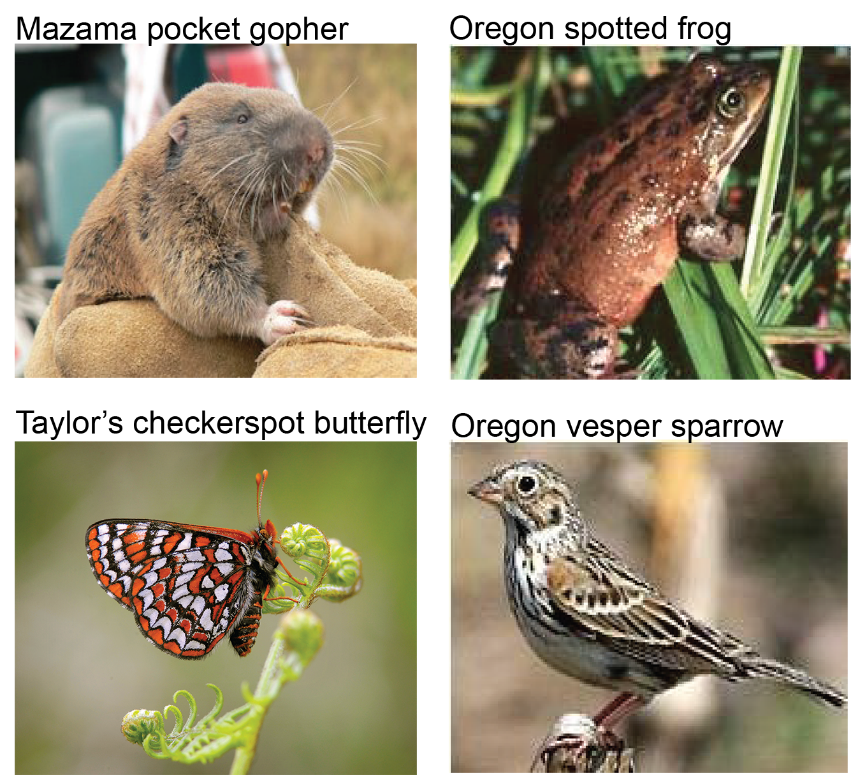 Image compilation of the pocket gopher, spotted frog, butterfly, and sparrow