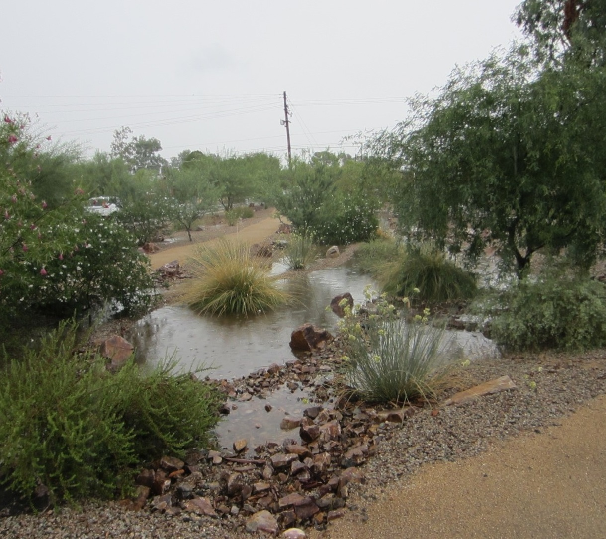 Basins collect rainfall runoff in a landscape along Lester Street.